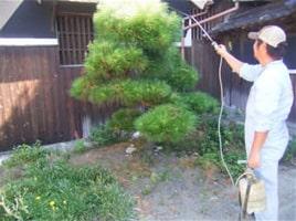 オプション例:植木剪定・害虫防除After