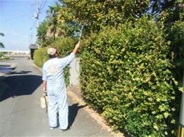オプション例:植木剪定・害虫防除Before